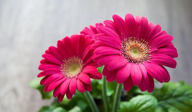 פרחים לנוי