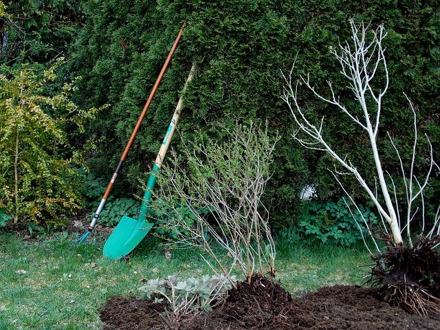 לעצב את הגינה