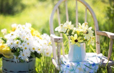 הדרך לטפח נכון את הגינה הביתית שלכם